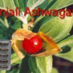patanjali ashwagandha capsule