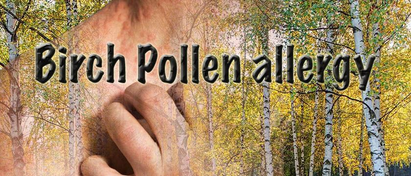 birch pollen allergy
