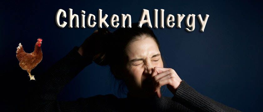 chicken allergy